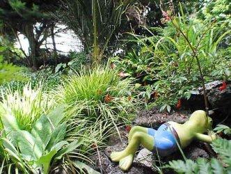Pilt 6 - FENG SHUI krundil ja aias
