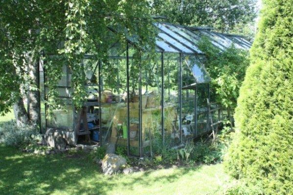 Pilt 2 - Kui sinul juhtub aias olema vana kasvuhoone...