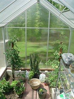 Pilt 4 - Kui sinul juhtub aias olema vana kasvuhoone...
