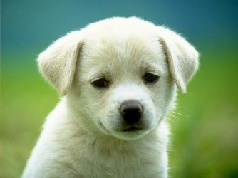 Võtsid koera ja tahad teada, mida vajab kutsikas uude koju tulles