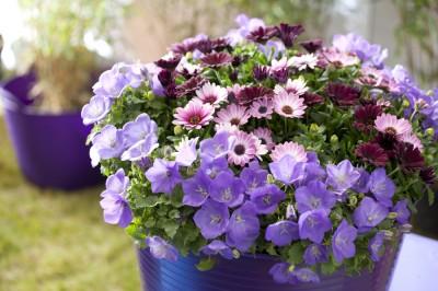 Pilt 5 - Milliseid lilli ja taimi istutada kevadel rõdule või terrassile?