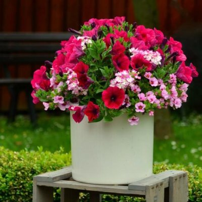 Milliseid lilli ja taimi istutada kevadel rõdule või terrassile?