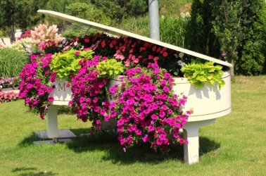 Pilt 4 - Suvelilled klaveris