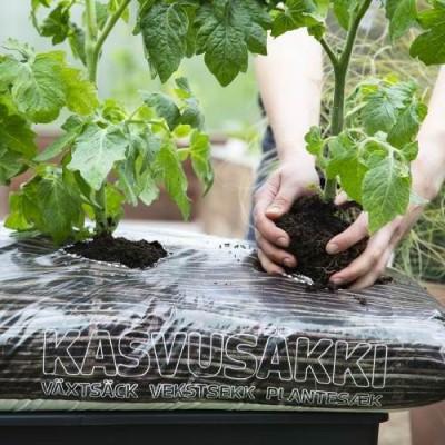 Tomatitaimed kasvukotis
