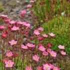 Millised taimed sobivad varjulise aianurga kujundamiseks?