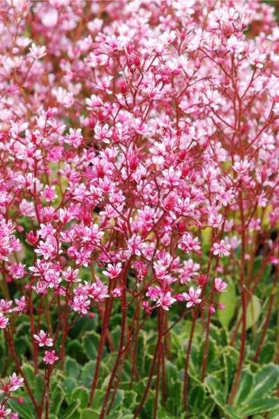 Millised taimed sobivad varjulise aianurga kujundamiseks