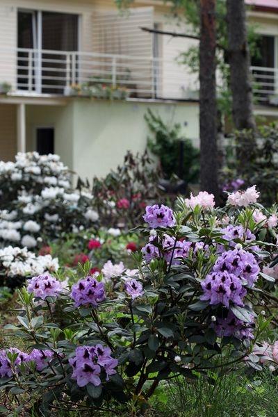 Rõdult avaneb hea vaade õieilule. Tumerohelised igihaljad põõsad pakuvad ka pärast õitsemise lõppu väikesele õuealale piiret.