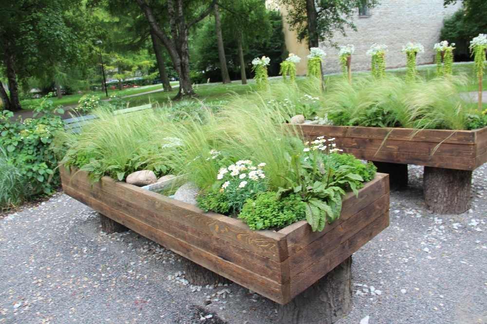 Pilt1-Hooliv aed