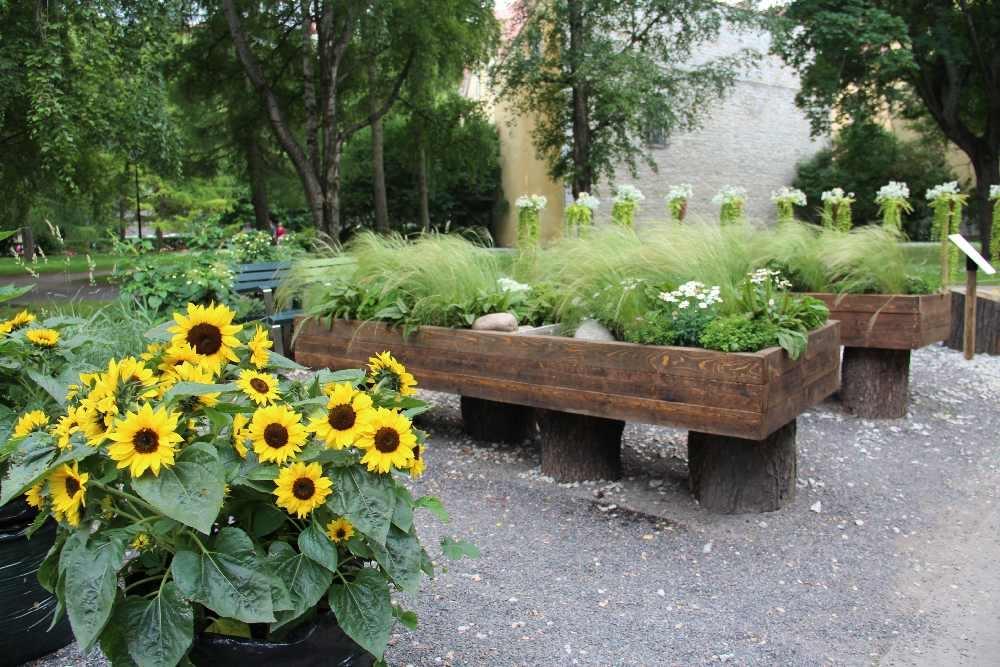 Pilt3-Hooliv aed