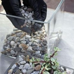 Kaktused aknalaual
