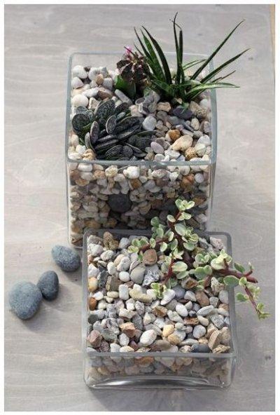 Pilt 2 - Kaktused aknalaual