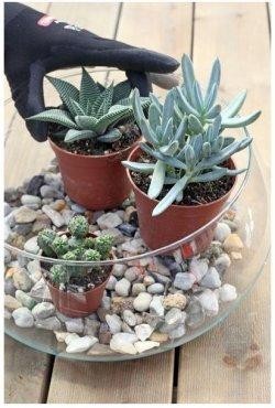 Pilt 3 - Kaktused aknalaual
