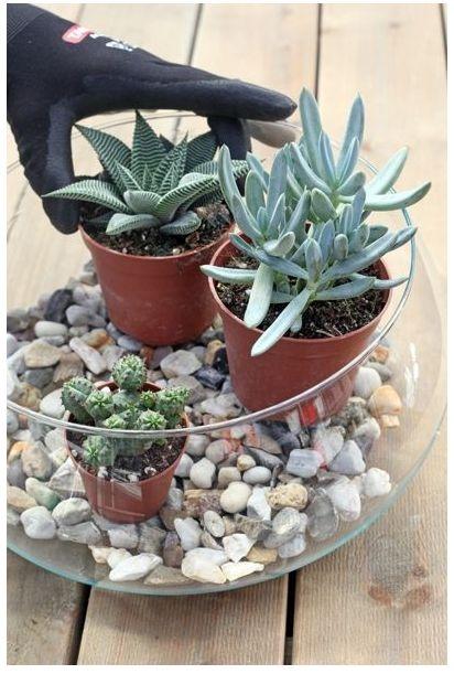 Pilt1-Kaktuste aed