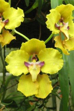 Pilt 4 - Orhidee