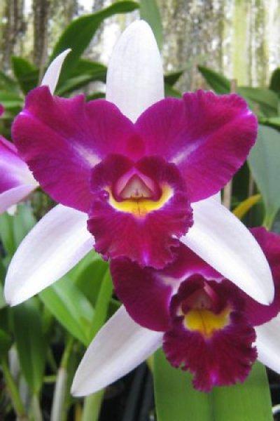 Pilt 3 - Orhidee