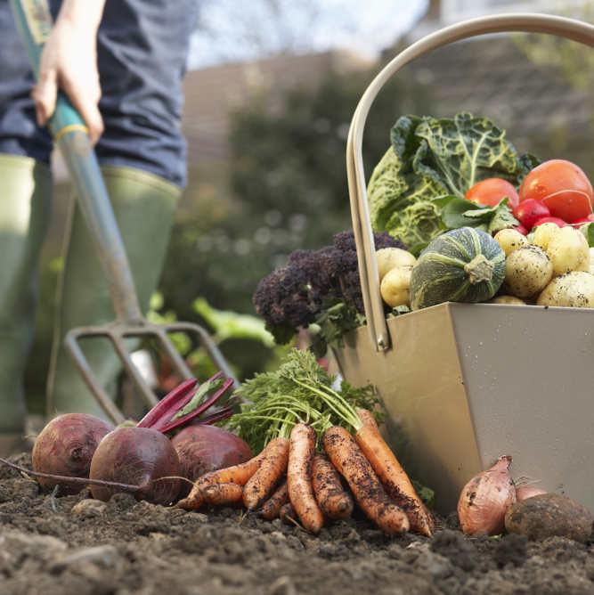 Säilita aiasaadused talviseks vitamiinilaenguks