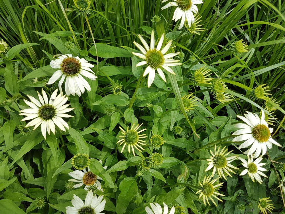 Aiaruum ühevärviliste taimedega