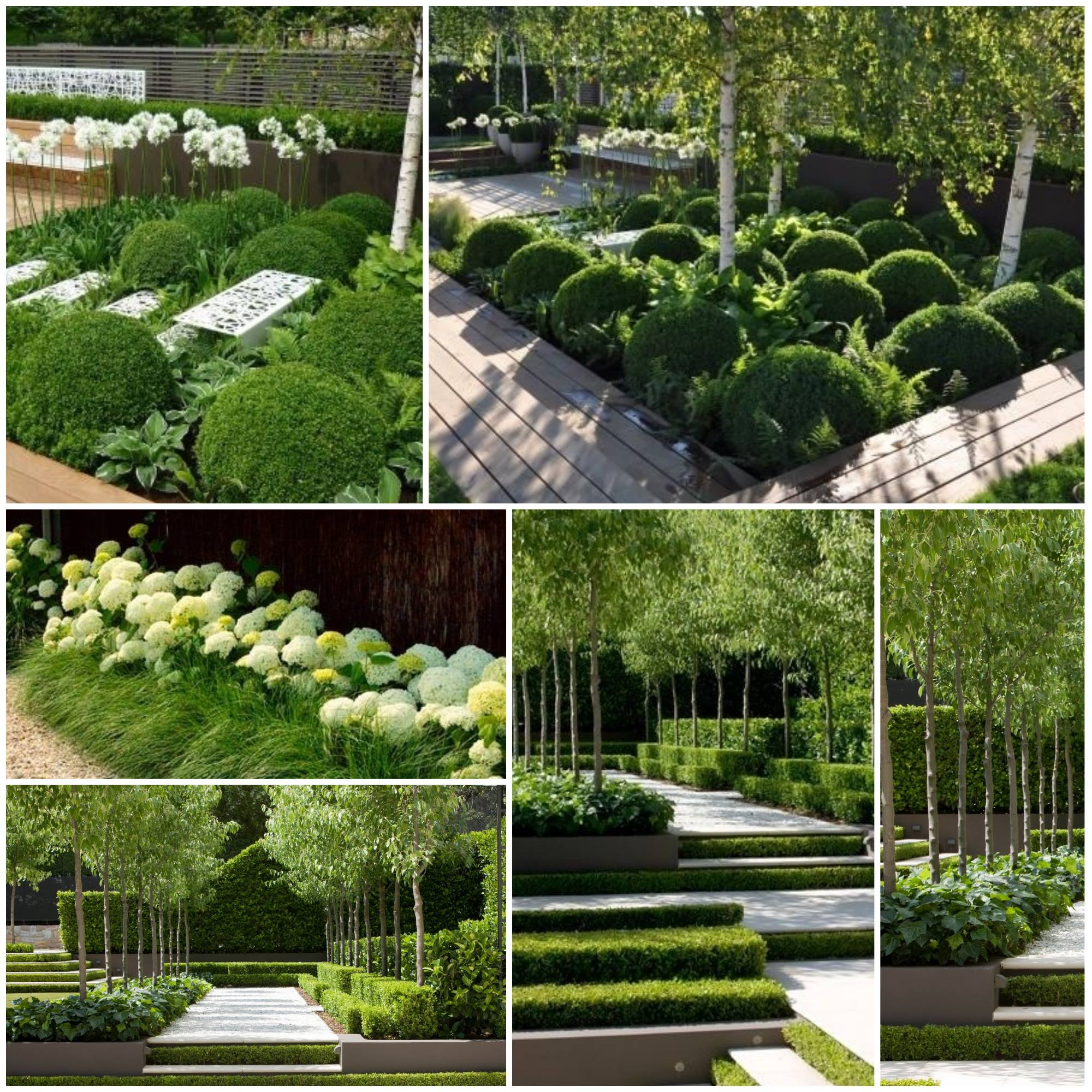 Ainulaadne aiaruum samavärvilistest taimedest