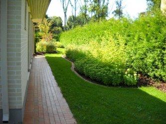 Pilt 5 - Ühetooniline taimekooslus heki ääres.