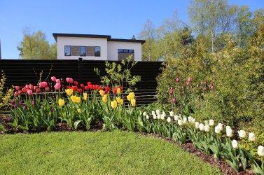 Pilt 8 - Sibullilled kevadises aias.