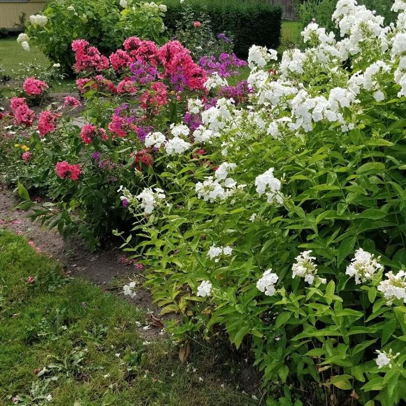 Nõuanded: kuidas koduseid taimi põua käest päästa?
