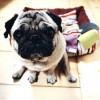 3 best fabrics for pet owners