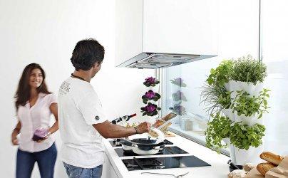 Pilt 5 - Taimepotid köögis