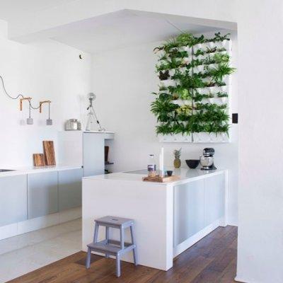 Maitsetaimed köögi seinale kasvama