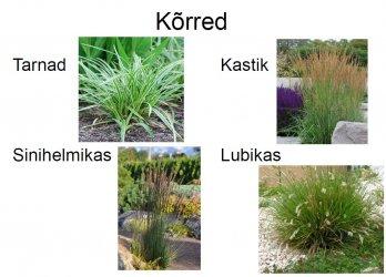 Pilt 2 - Kõrrelised aiakujunduses