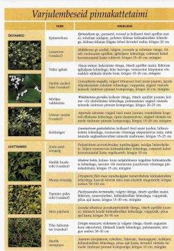 Pilt 3 - Varjulisse kohta sobivad taimed ja lilled.