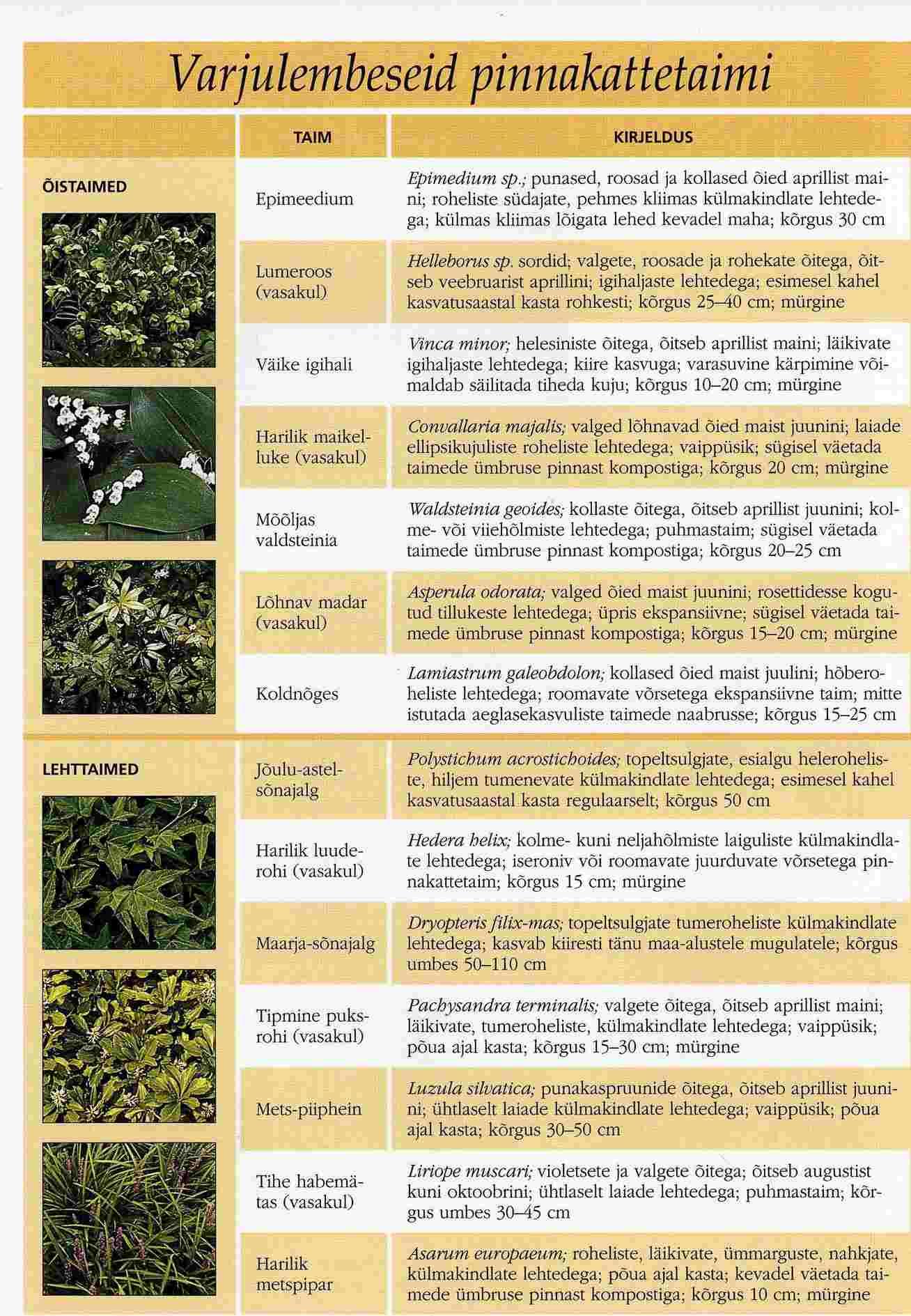 Varjulisse kohta sobivad taimed ja lilled.