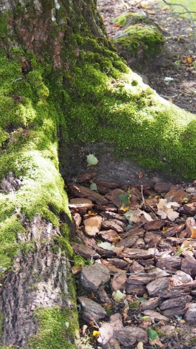 Multš puu ümber - 3