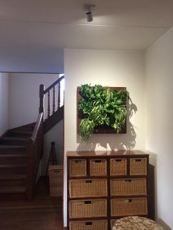 Growerts vertical landscaping - enjoy your wonderful plant painting