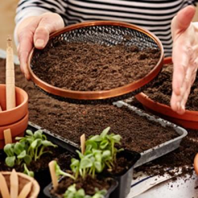 Külvake seemned võimalikult ühtlaselt, puistades need mullapinnale. Seda nimetatakse hajuskülviks. - 2