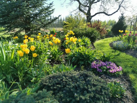 Pilt 12 - Kevadel loovad peenras ilus erinevad sibullilled.