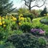 Rikkaliku taimevalikuga püsilillepeenra rajamine