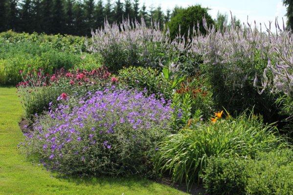Pilt 5 - Püsilillepeenar - ühtse terviku loomisel tuleks arvestada, millised taimed kasvuomaduste poolest omavahel sobivad