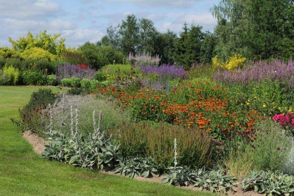 Pilt 4 - Rikkaliku taimevalikuga püsilillepeenarde rajamist alustada peenraplaanist.