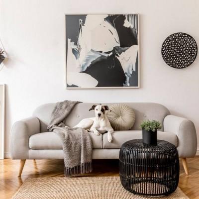 Kuidas valida diivanit, kui kodus on koer?