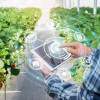 Milliseid lisavidinaid on vaja nutika kasvuhoone ehitamiseks?