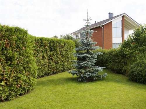 Mida arvestab aiakujundaja kui valib aiaprojekti jaoks aeda taimi