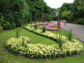 Pilt 6 - Tegevuskava algajale aiakujundajale-istutajale