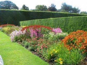 Pilt 18 - Tegevuskava algajale aiakujundajale-istutajale