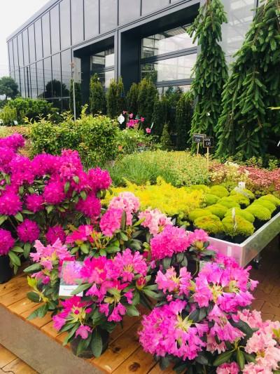 Taimede väliala Gardesti kodu- ja aianduskeskuses - 4