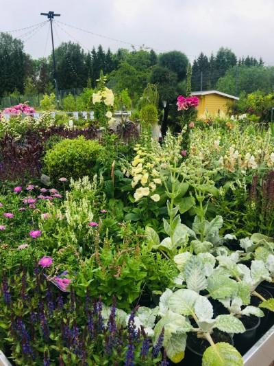 Taimede väliala Gardesti kodu- ja aianduskeskuses - 3