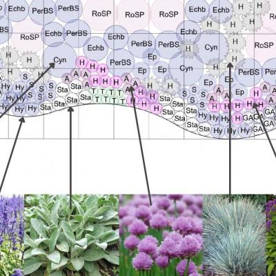 Kauaõitsev lillepeenar kuival ja tuulisel kasvukohal - uus näidisplaan!