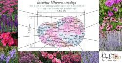 3 - Kauaõitsev lillepeenar kuival ja tuulisel kasvukohal - uued näidisplaanid!