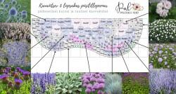2 - Kauaõitsev lillepeenar kuival ja tuulisel kasvukohal - uued näidisplaanid!
