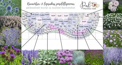 Lae alla peenraplaan - istutusjuhend ja taimede kogused ning nimed - 1