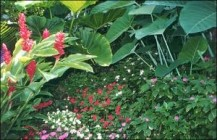 Nõuandeid troopilise aia kujundamiseks
